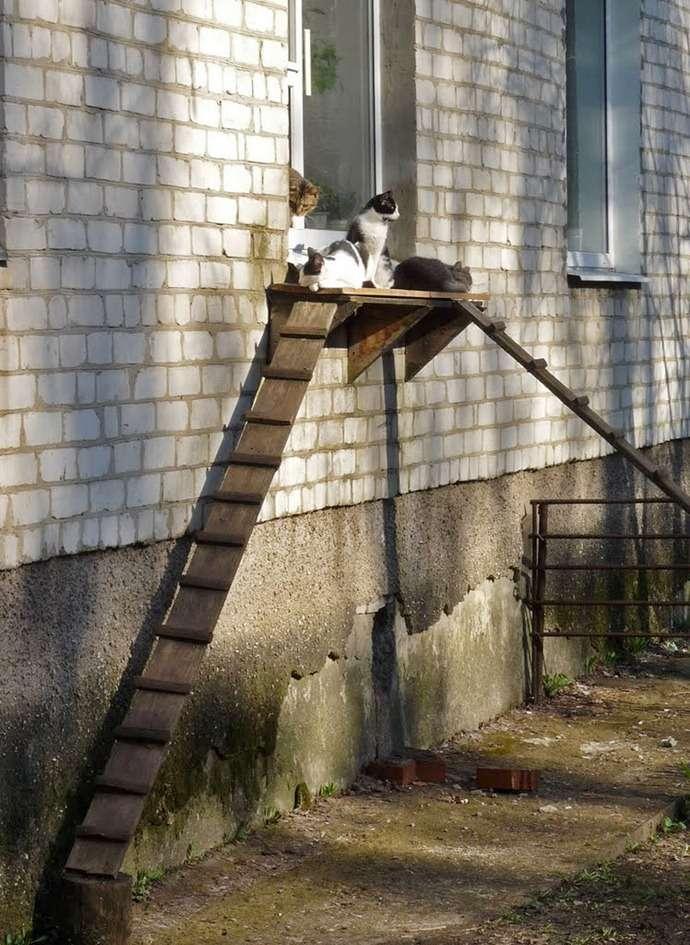 original1ns - El puente de los gatitos