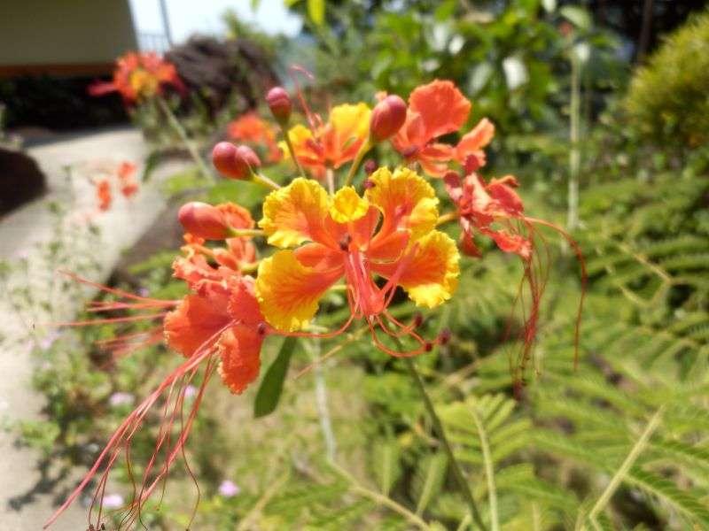 tägliches Blumenbild